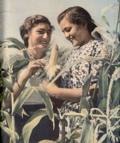 Кукурузоводки_Крестьянка №10 окт 1956 - сж