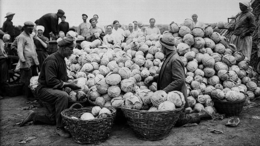 Капуста для русского - второй хлеб