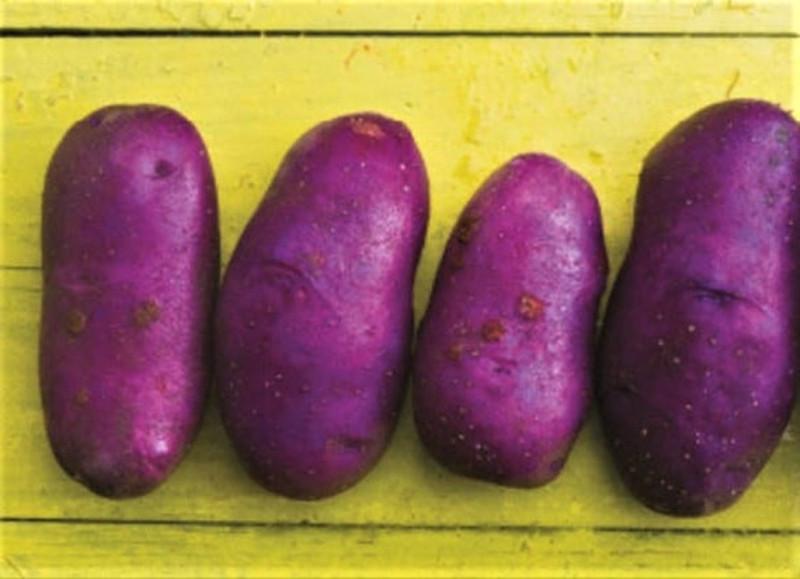 За вашу и нашу картошку! картофеля, картофель, здесь, картошка, выставки, только, разделе, место, сортами, окультуривания, части, знаем, больше, Здесь, самое, совсем, претендуют, растет, много, сравнению