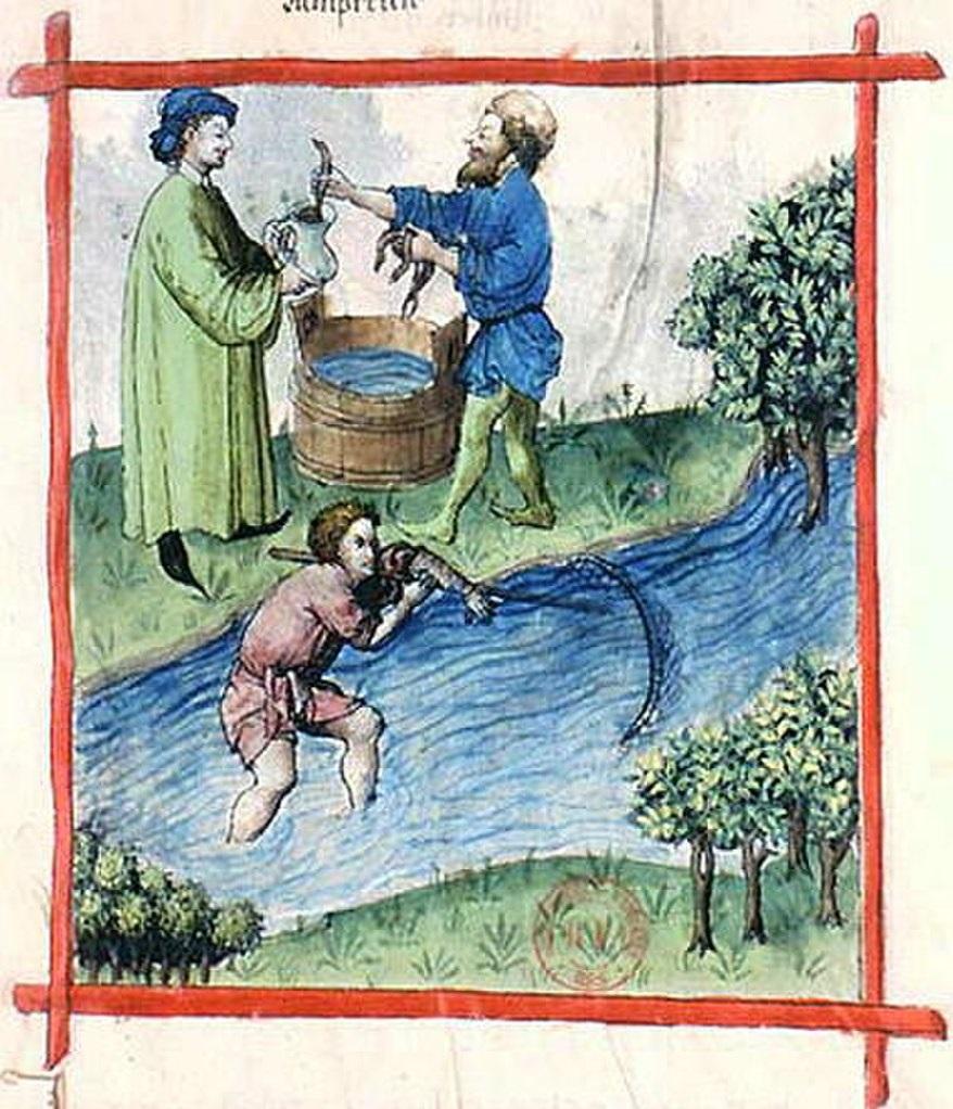 Ловля миноги. Иллюстрация из книги Tacuinum Sanitatis, текст 15-го века о здоровье и медицине