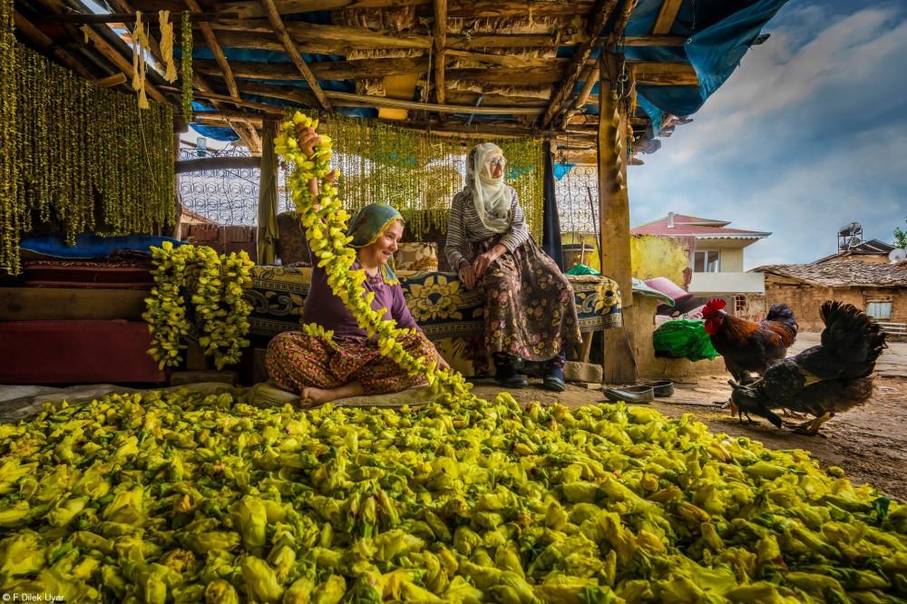 Сушка цветов окры в Токате, Турция. Женщины собирают цветы окры и укладывают их на веревку, затем сушеные цветы опадают, и окра становится готовой к использованию зимой
