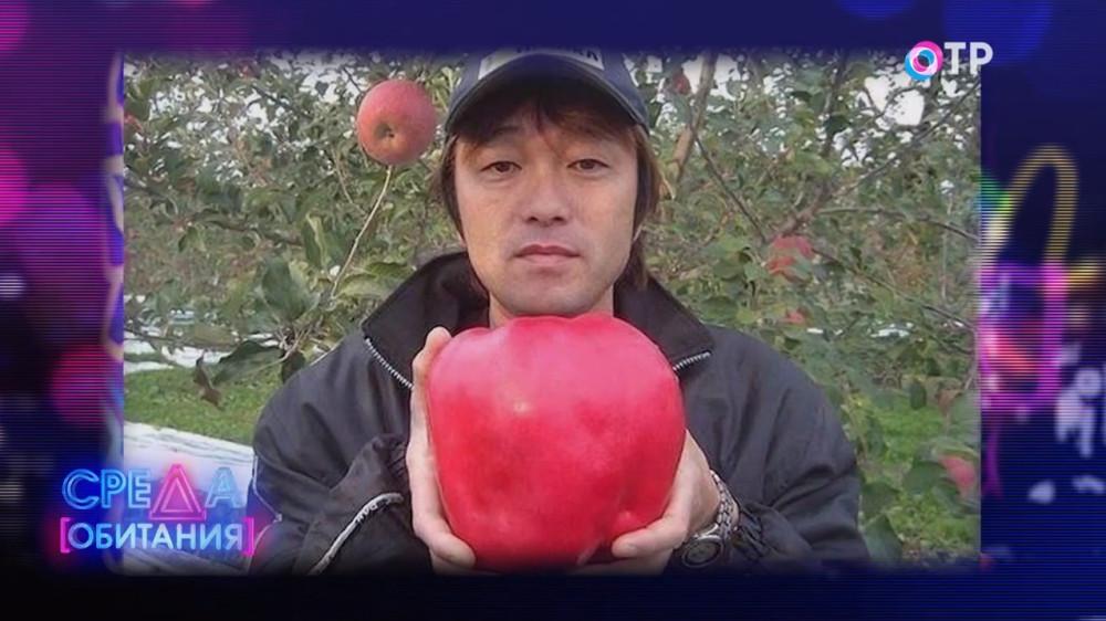 Идеальное яблоко бывает только в сказках? Яблоки