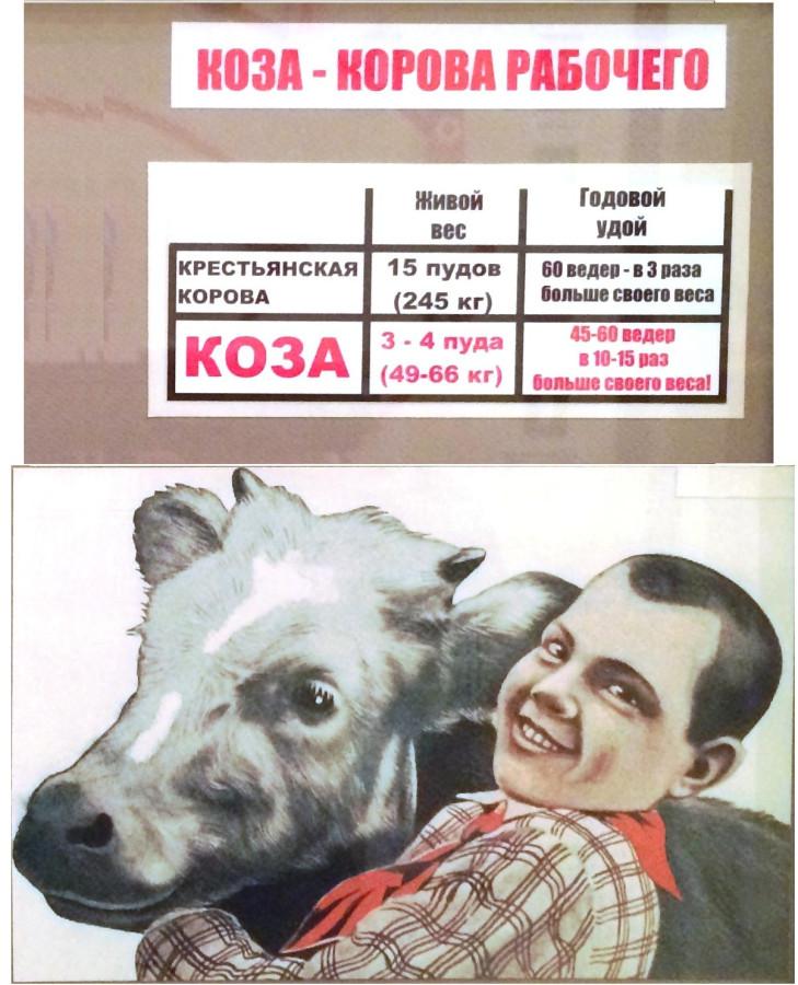 Коза- корова рабочего