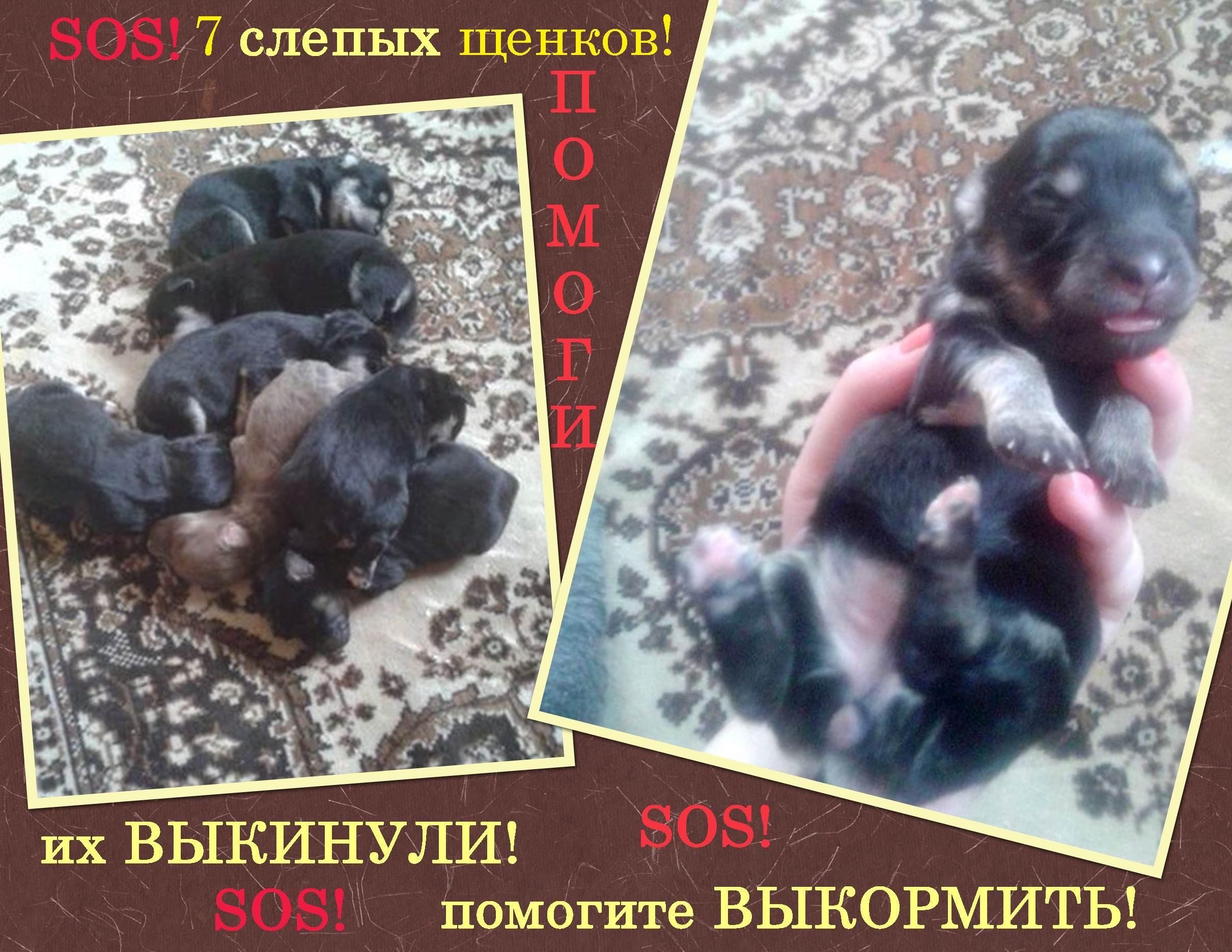 живой журнал жизнь щенка