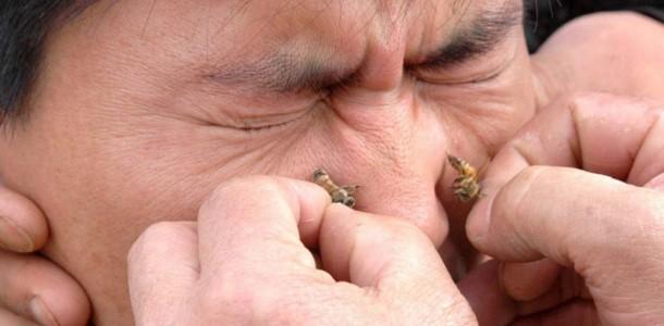 Пчела укус у половой член