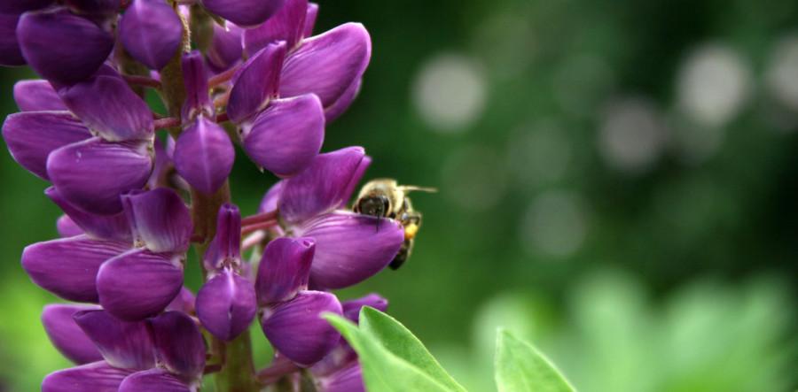пчёлка на цветке.