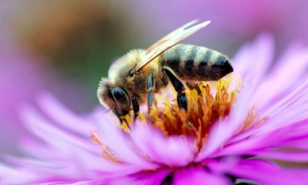 Цветы для пчел фото