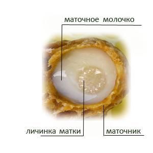 matochnoe-molochko