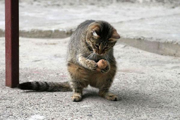 1150997968_cat
