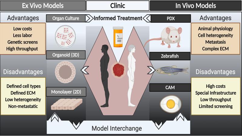 Схема, показывающая несколько платформ, доступных для моделей рака, полученных от пациентов. Источник: Брайан Велм.