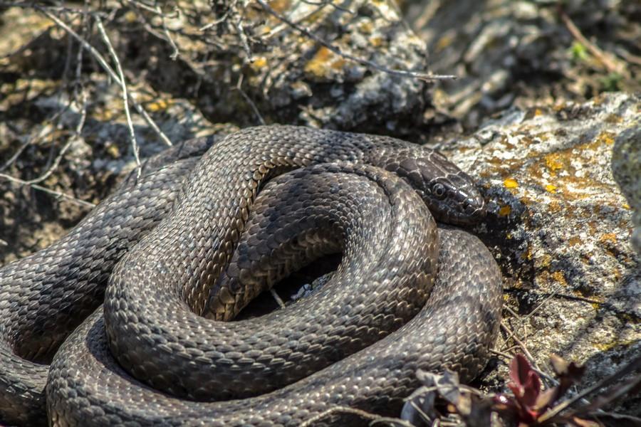 расположился между фотографии змей в саратовской области образом, человек прикасается