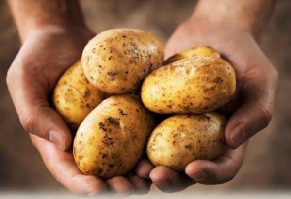 cartofel