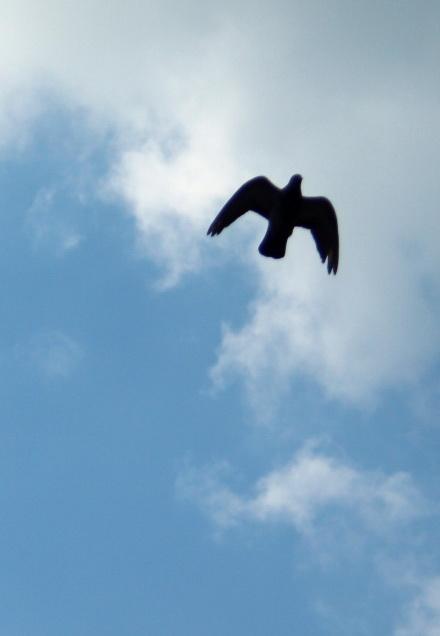 Птицы-летящие-в-небе