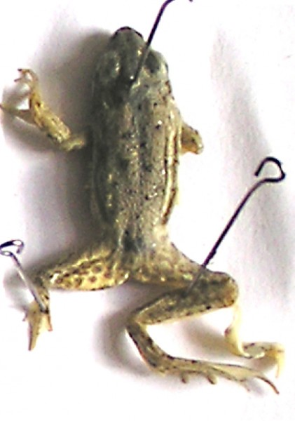 жаба-1