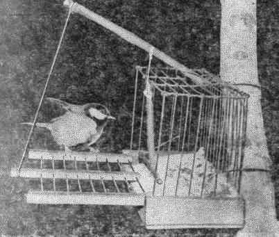 Как сделать ловушку для птиц в домашних условиях видео