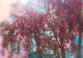 Стихи о природе (стихи из Шабалинского района)