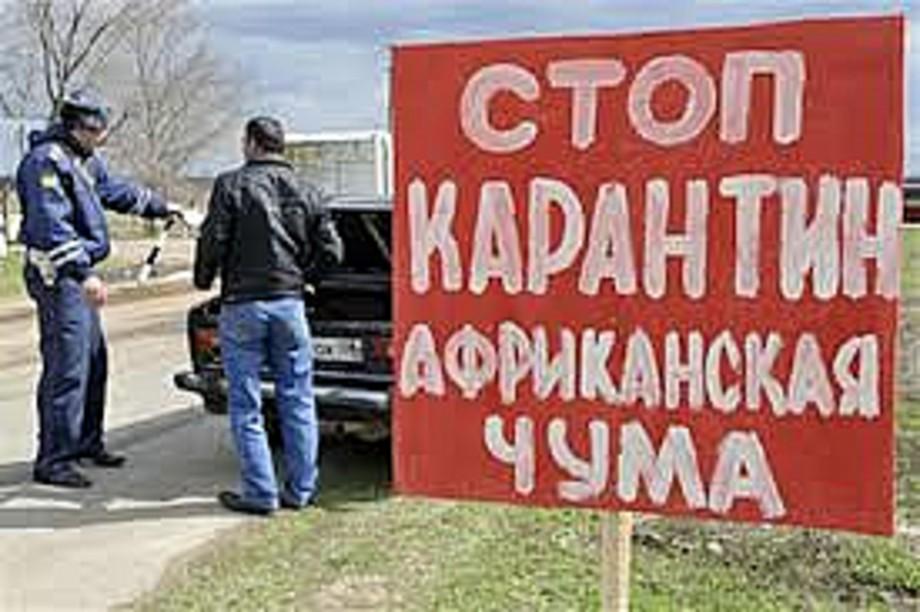 В Кировской области организовано командно-штабное учение с целью ликвидации африканской чумы свиней