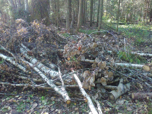 С мыслями о будущем леса