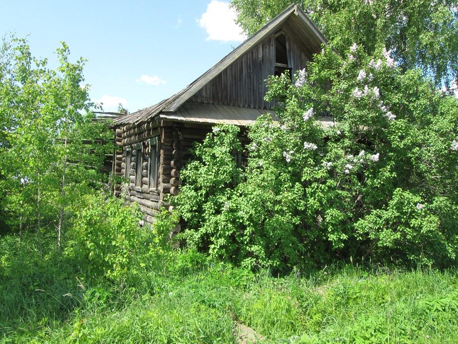 Шабалинские деревни зарастают борщевиком и бурьяном