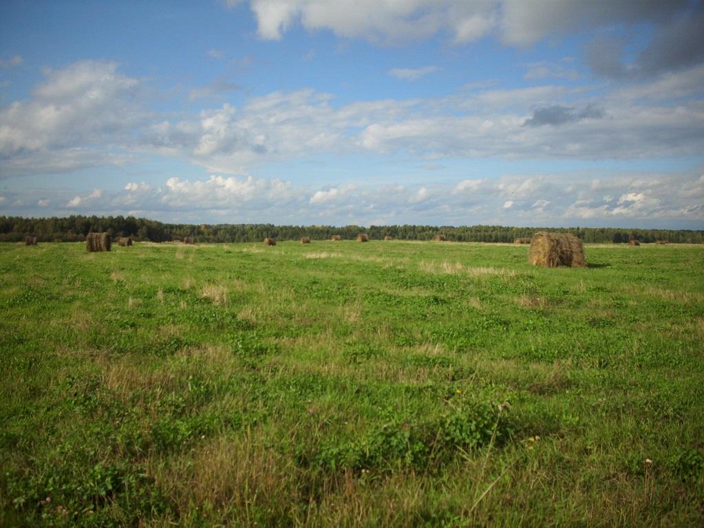 Почвы Шабалинского района малопригодны для возделывания сельскохозяйственных культур