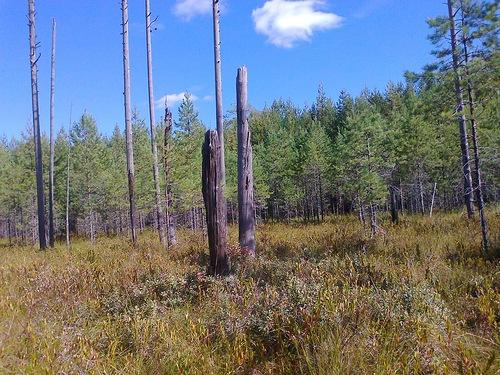 Какие болота есть в Шабалинском районе?