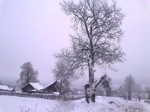 Стихи о деревне. Деревня Жуки