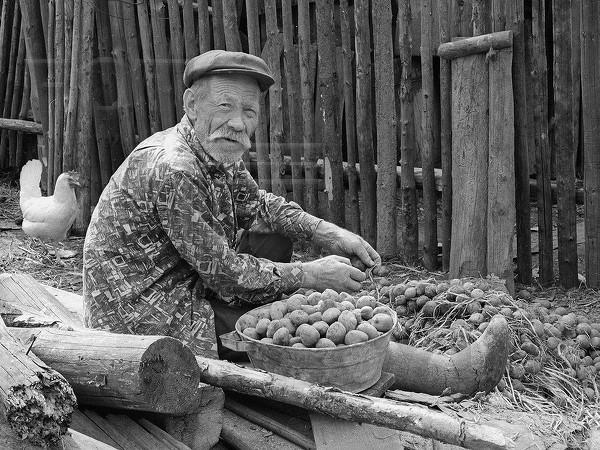 Стихи о селе. Второй русский хлеб