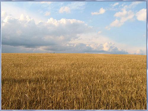 Стихи о селе.   Хлебным полем пропахла одежда