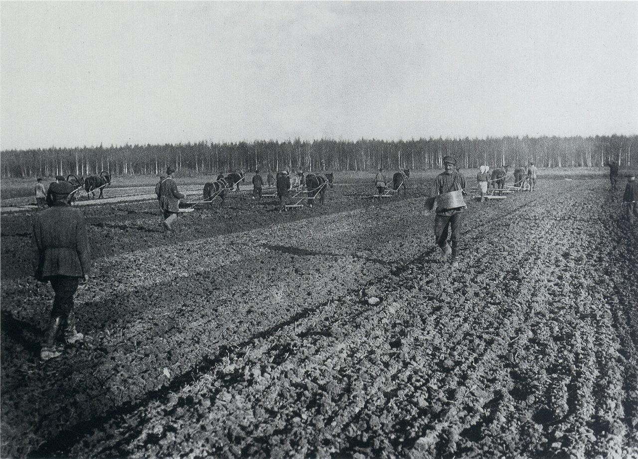 Животноводство в Вятском крае