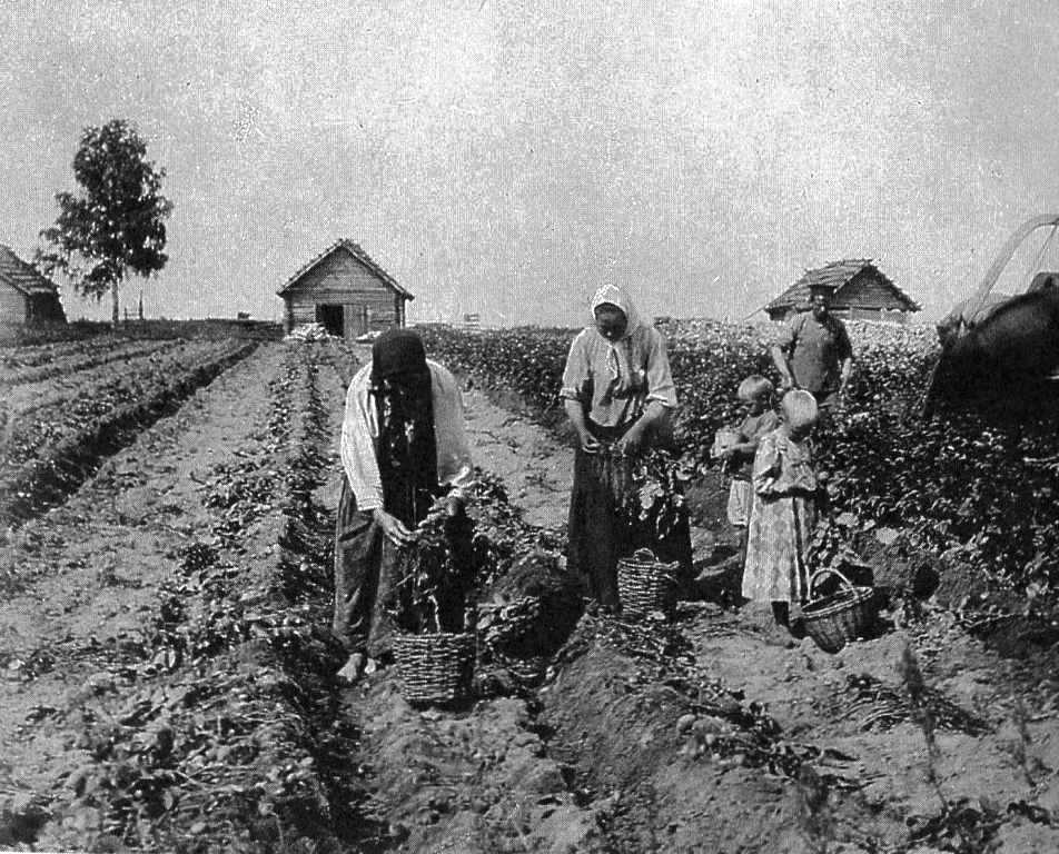 Почему крестьяне Вятского края ждали Ильин день?