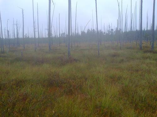 Призрак в шабалинских лесах Вятского края