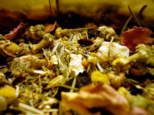 лечебный чай монастырский сбор от паразитов