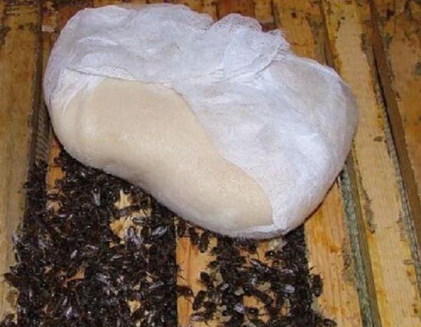 Как приготовить канди для пчел, пропорции, видео