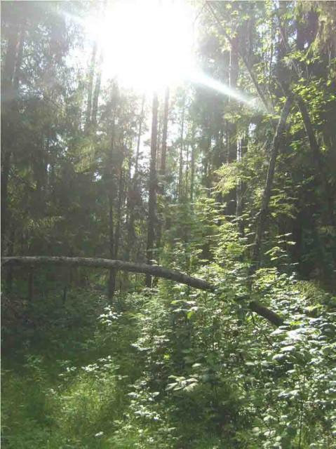 Шабалинский район, высоковский лес