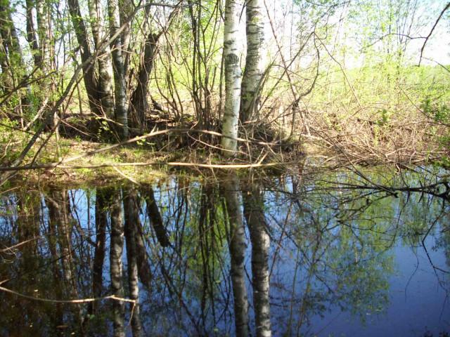 Шабалинский район.   Отголоски весны
