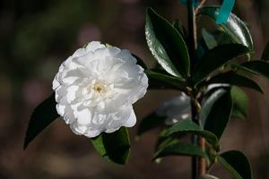 white_doves_071117_101455