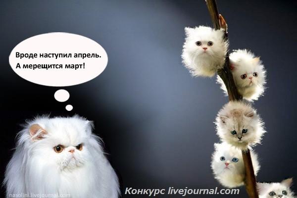 Кошко-улыбалка_original_LOGO_.jpg