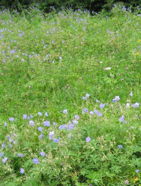 Бавария-травы