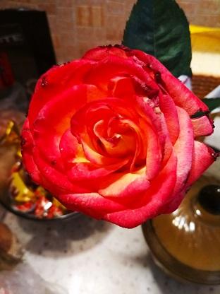 роза моя