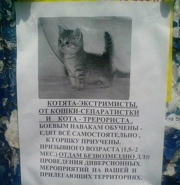 Terror Cats