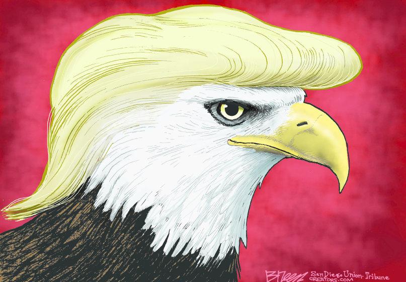 US Eagle Hair