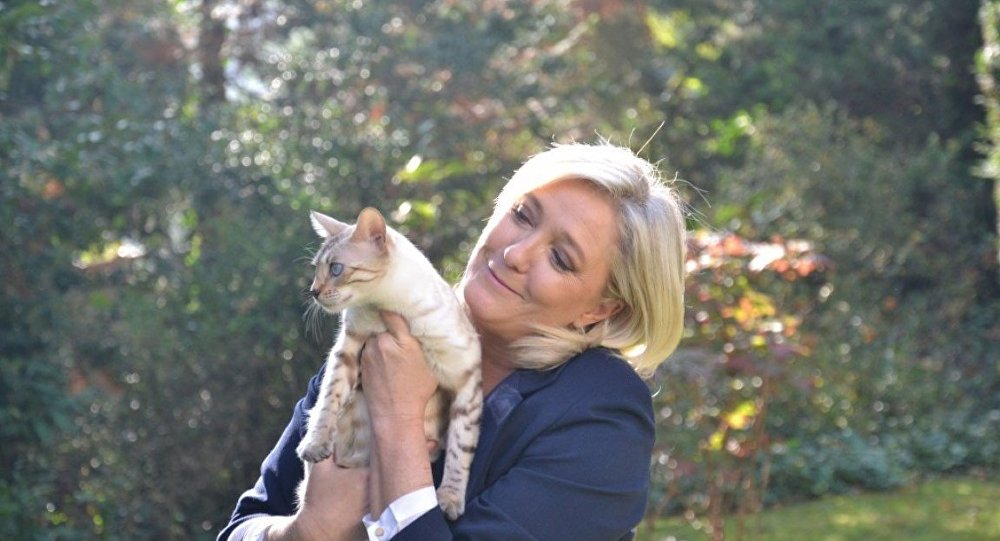 Marin's Cat