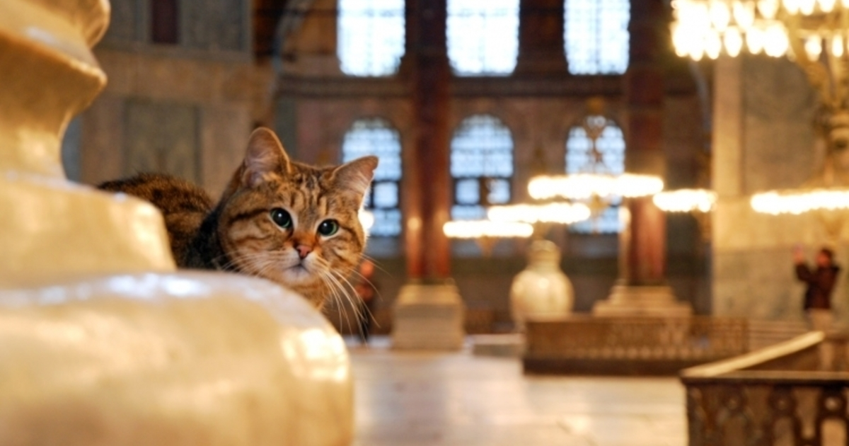 Cat in the Tample 1