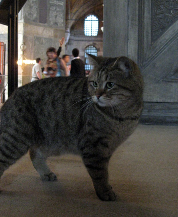 Cat in the Tample 2