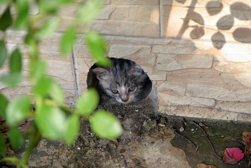 cats12.jpg