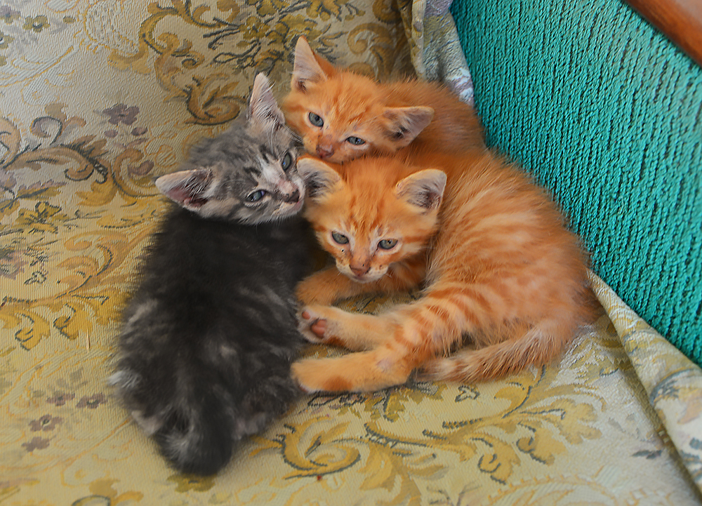 cats13.jpg