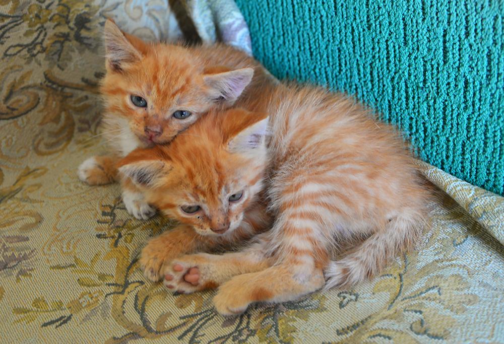 cats14.jpg