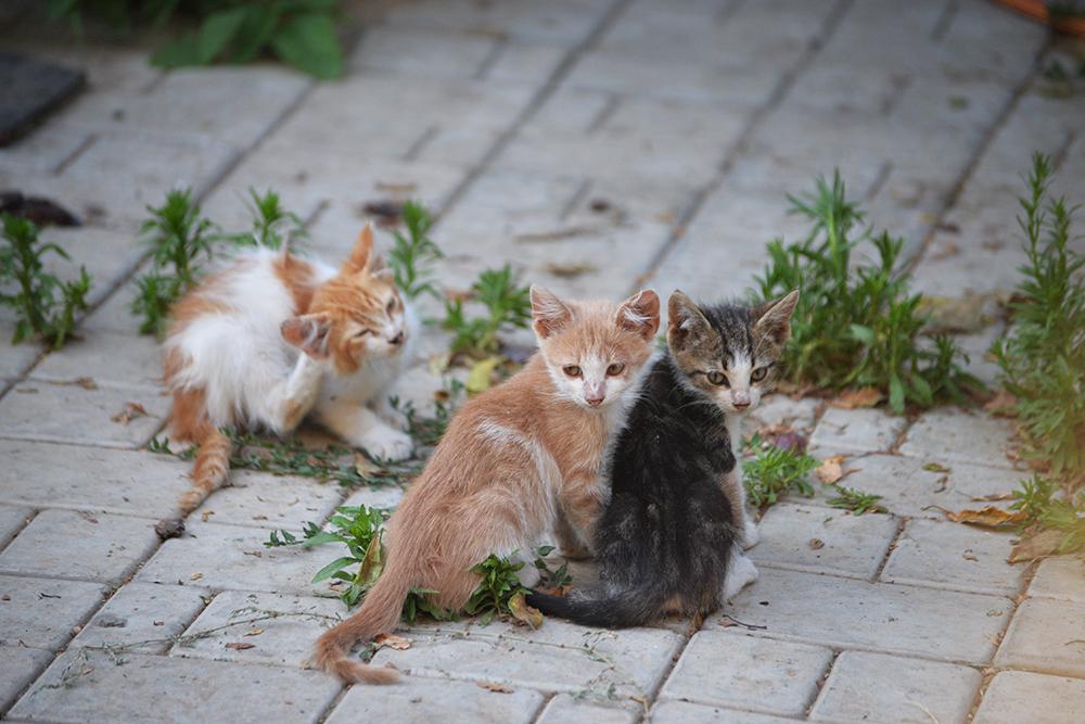 cats17.jpg