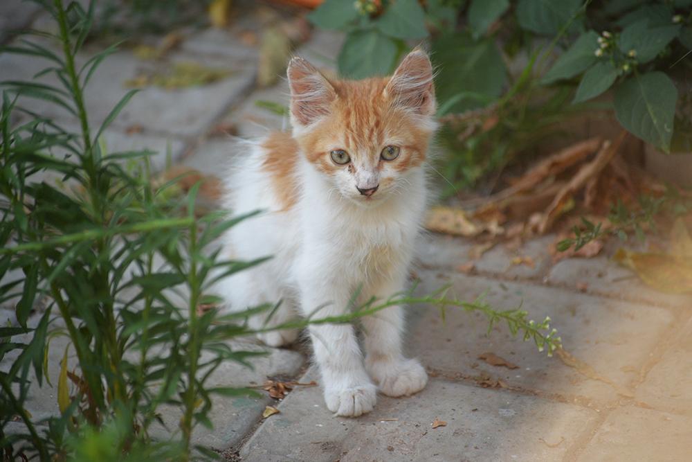 cats19.jpg