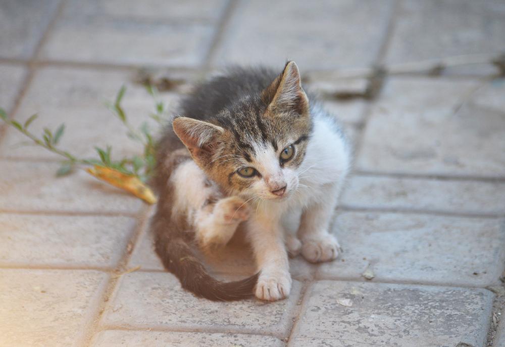 cats20.jpg